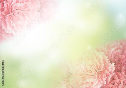 Photo carnation