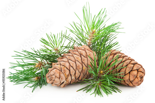Obraz Cedar cones with branch - fototapety do salonu