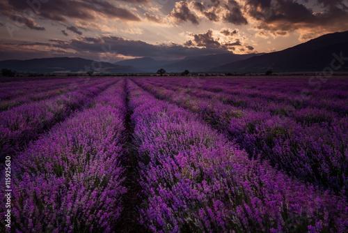 Spoed Foto op Canvas Violet Cloudy sunset at lavender field, near Kazanlak town, Bulgaria