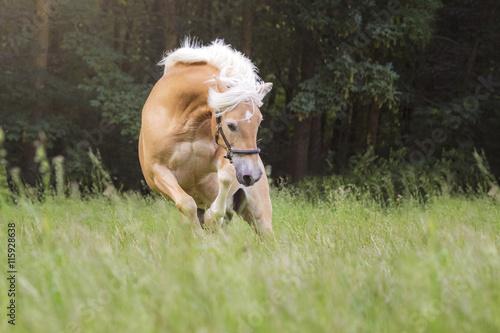 Pferd bockt