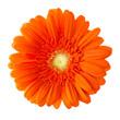 Leinwandbild Motiv Blume Gerbera