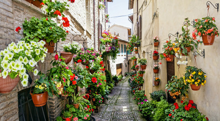 Plakat Beautiful street decoration with flowers in medieval town Spello