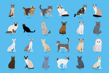 Set Of Cat Breeds, Vector Illustration