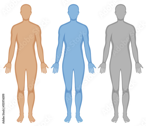Fototapeta Human body outline in three colors