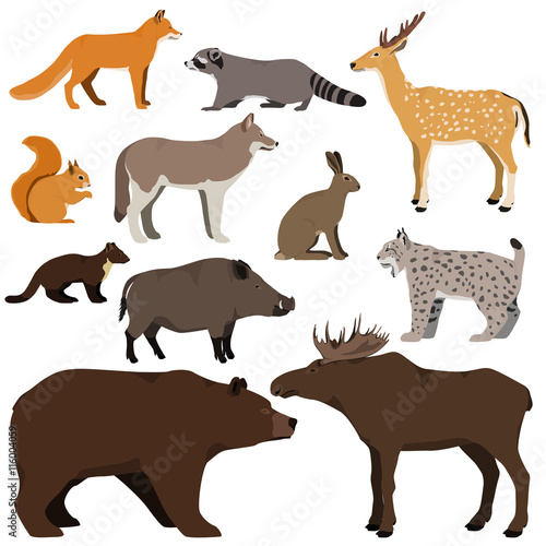 Fototapeta premium Vector set of cartoon forest animals. Brown bear, raccoon, squirrel, spotted deer, lynx, marten, wild boar, elk, wolf, fox, hare.