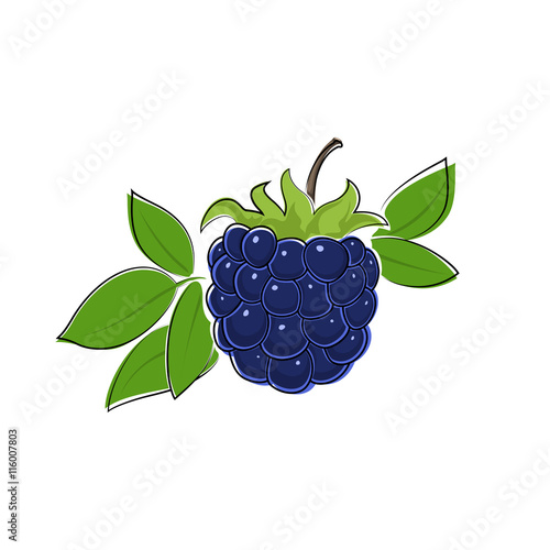 Fényképezés  Berry Blackberry Isolated on White Background, Fruit Dewberry, Vector Illustrati