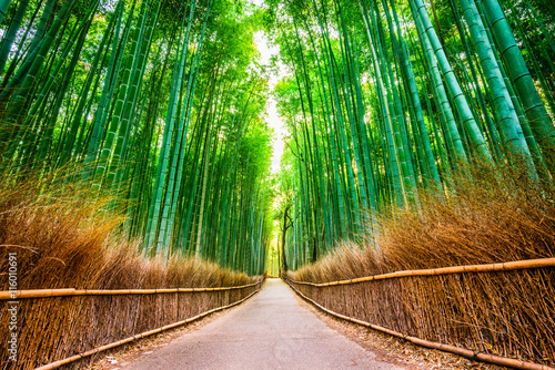 Spoed Fotobehang Bestsellers Kyoto, Japan at the Bamboo Forest.