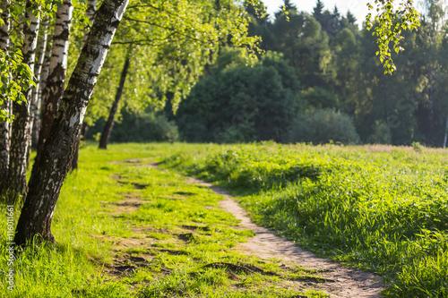 Poster Kaki Sunlight in the green forest, spring time
