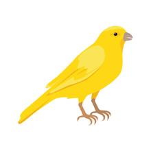 Canary Flat Design Vector Illustration
