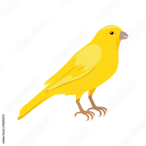 Fotografia Canary Flat Design Vector Illustration