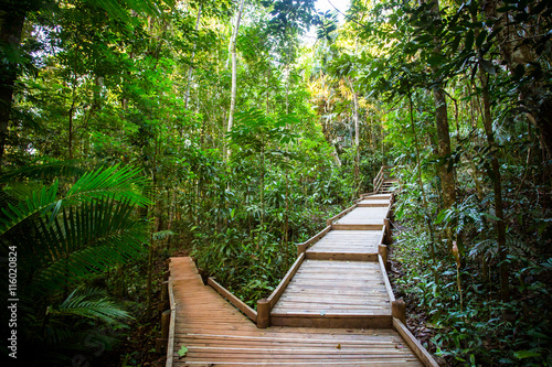 Printed kitchen splashbacks Australia The Daintree Jindalba Boardwalk
