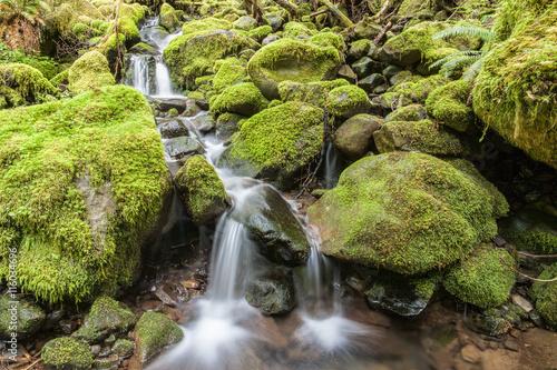Fotografie, Obraz  Cascades through moss covered rocks.