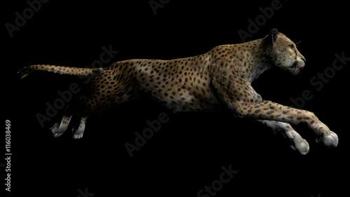 Fotografie, Obraz  The image of a gepard
