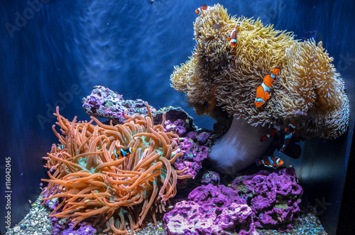 Fotografie, Tablou  Nemo