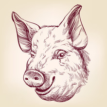 Pig Hand Drawn Vector Llustrat...