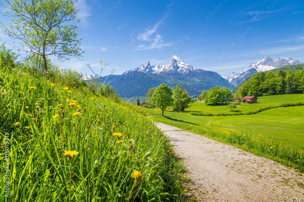 Fototapety, obrazy: Idyllic landscape in the Alps with meadows and flowers