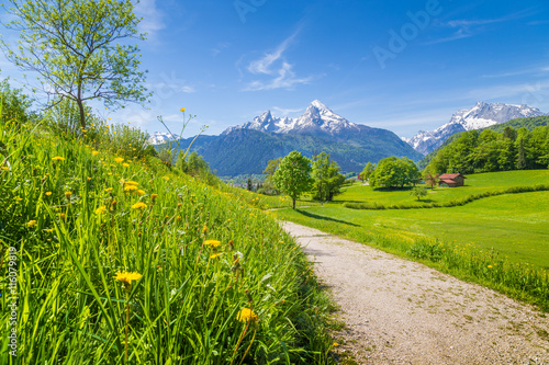 Fototapeta Idyllic landscape in the Alps with meadows and flowers obraz
