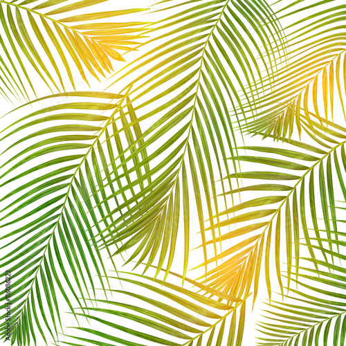 Foto op Canvas Tropische Bladeren sun over green leaves of palm tree on white background