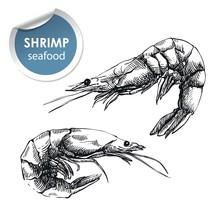 Two Raw Shrimp