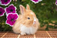 Little Red Rabbit Sitting Near Beautiful Flowers