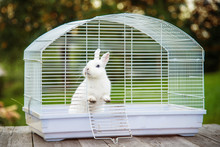Little White Rabbit Sitting In The Cage