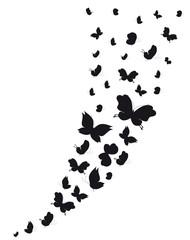 Plakat butterflies design