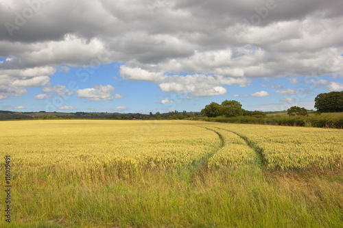 Staande foto Meloen wolds wheat field