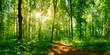 canvas print picture - Waldweg im Sonnenschein