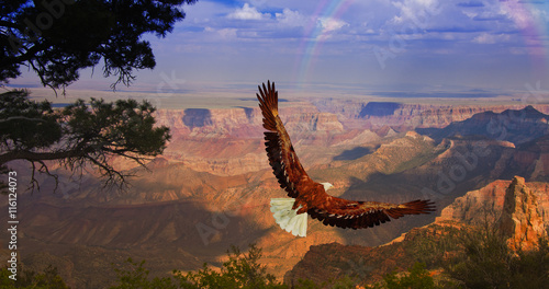 In de dag Eagle Eagle takes flight over Grand Canyon USA