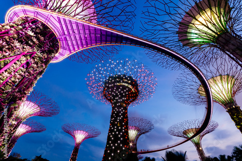 Night view of the Supertree Grove in the Graden by the Bay in Singapore.
