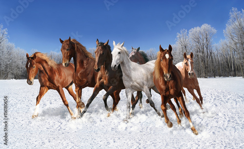 Photo  galloping horse in winter
