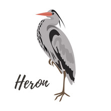 Isolated Gray Heron Bird On A White Background, Vector Illustration, Hand Drawn