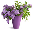 Bouquet of lilac flower in a jug on wooden surface and isolated on top