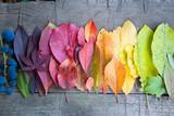 Fototapeta Tęcza - Autumn leaves and berries