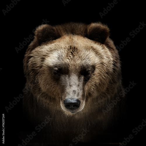 Photo  bear portrait isolated on black