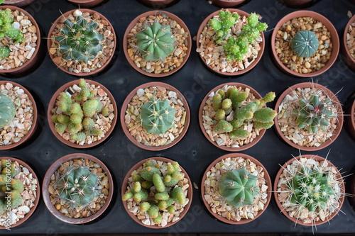 Papiers peints Cactus Plenty of Cactus on Wooden Table