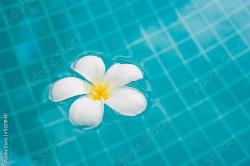 Spoed Foto op Canvas Iris Frangipani flower