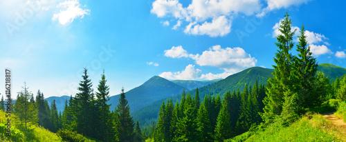 Fototapeten Wald Summer forest