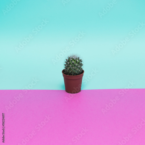 Keuken foto achterwand Cactus trendy cactus in pink and blue colors