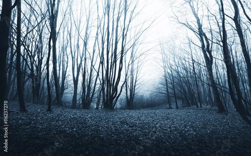 Fotografia spooky forest at twilight