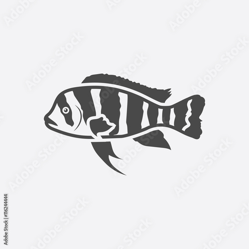 Frontosa Cichlid Cyphotilapia Frontosa Fish Icon Black Simple Singe