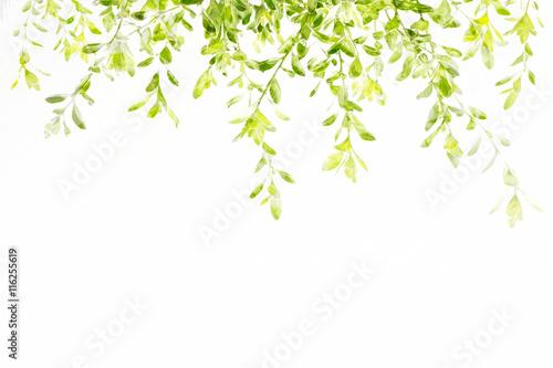 Watercolor fresh green leave spring summer season, spring summer background.