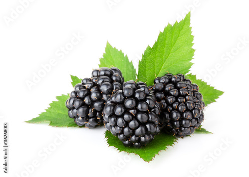 Three ripe blackberries with leaves Slika na platnu
