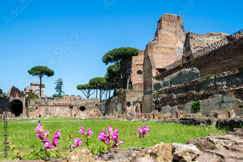 Valokuva  the ruins of the Stadium on the Palatine Hill in Rome, Italy