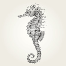 Hand Drawn Seahorse. Vintage Vector Illustration Of Marine Fish