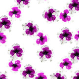 Beautiful floral background isolated purple petunias