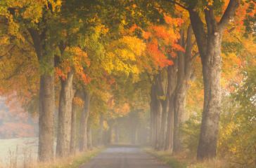 Northern Poland./ Autumn road.