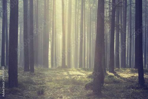 Kashubia, Poland/ Morning light.