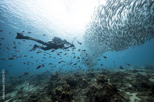 Fotobehang Duiken Unterwasser - Riff - Fisch - Fischschwarm - Tauchen - Curacao - Karibik