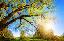 Die Sonne Geht über Dem Land Auf Und Scheint Durch Einen Schönen Baum
